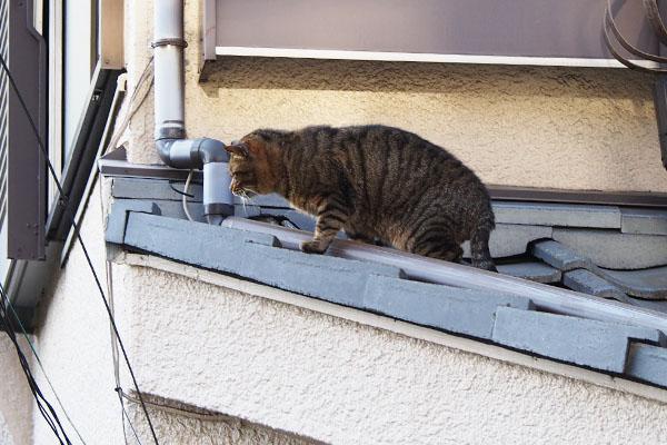 屋根の端っこにファン