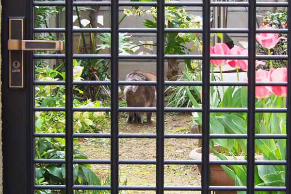 beyond the fence guri グリ