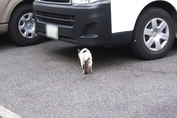 車の下へ移動するテン
