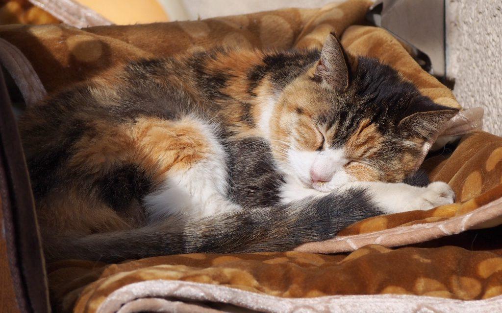 otowa sleep on blanket again