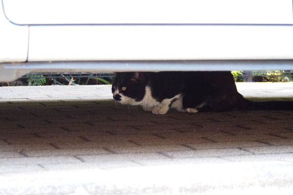 車の下に白黒猫さん