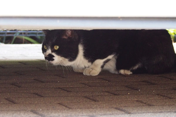 bk cat at noth area