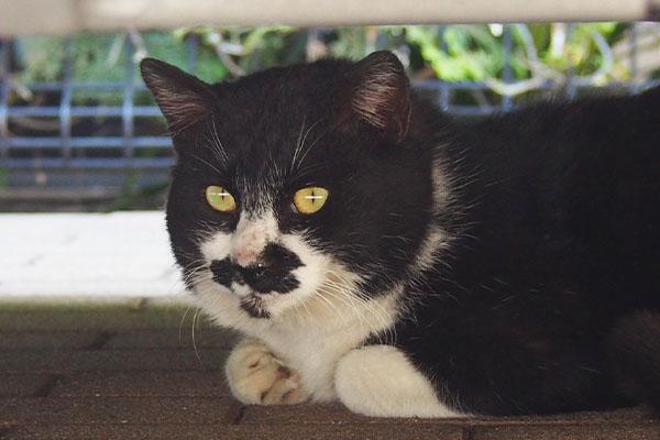 最後の一枚 白黒猫さん