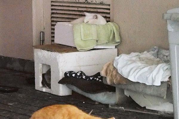 チロルテル専用の箱で寝ている
