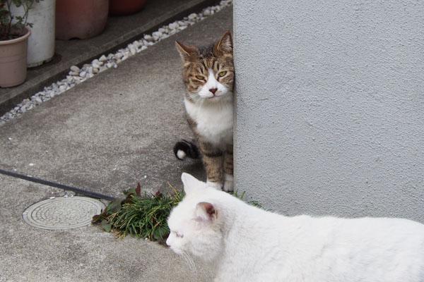 sahya and riri フレームインする白猫