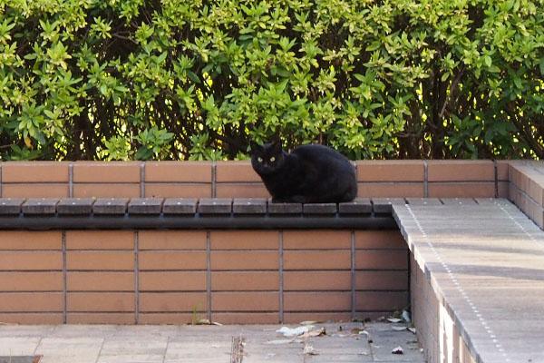 遠くに黒仔猫