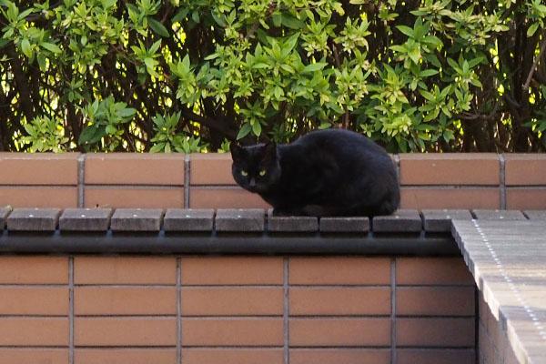 丸い目をした黒仔猫