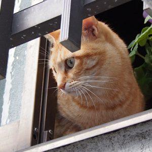 sora checking outside