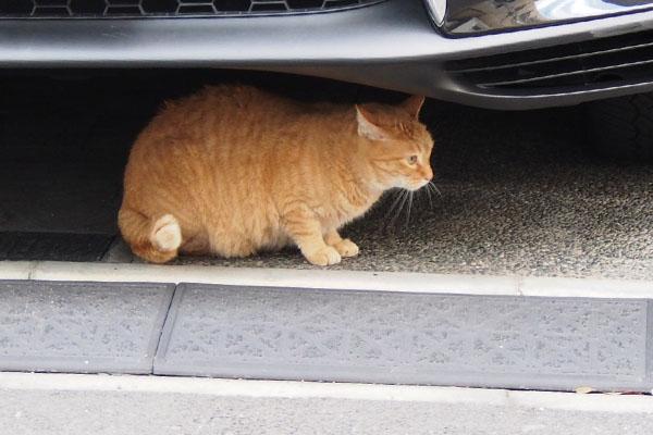 車の下に避難 ひまわり