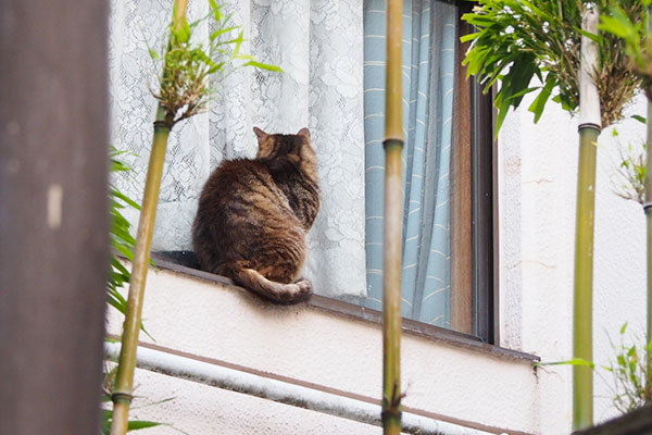 marle back at window
