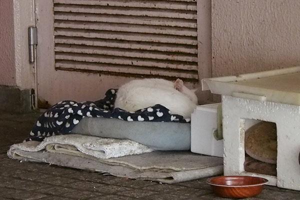 チロル ひとりハート毛布