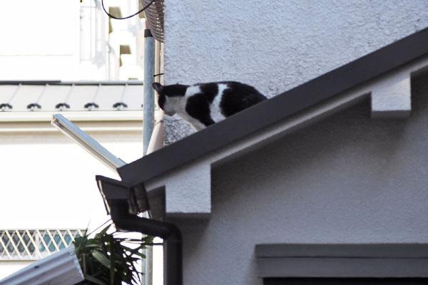 屋根にニコル