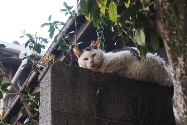 teru watching me