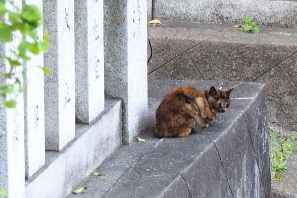 階段の上からクロテ 横向く