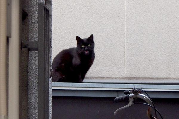 猫道にアカシ ニャー