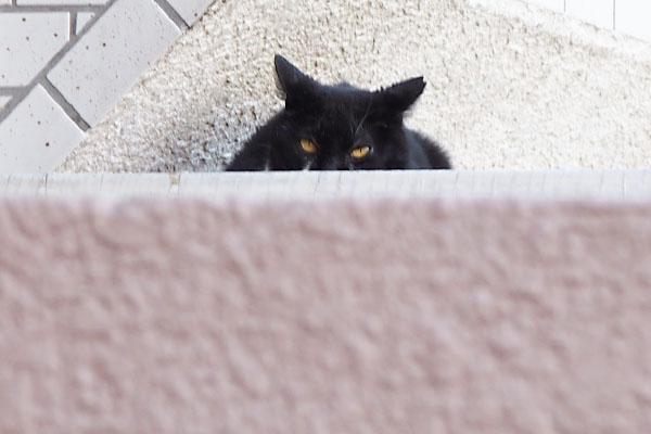 黒猫かと思った オレオ