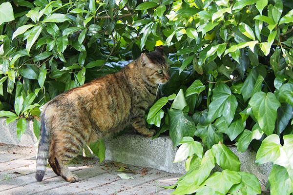 茂みに入ろうとしているサキ