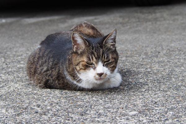 猫風邪引いたのかな フラワー