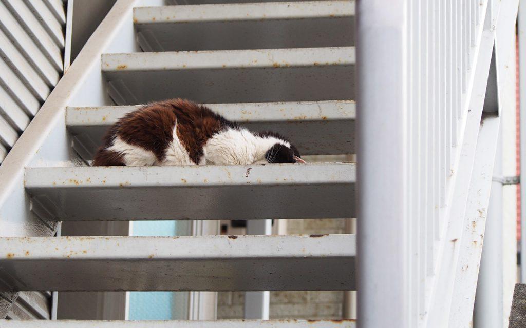 caru funny sleeping posture