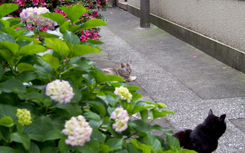 猫と花 手前アカシ奥銀