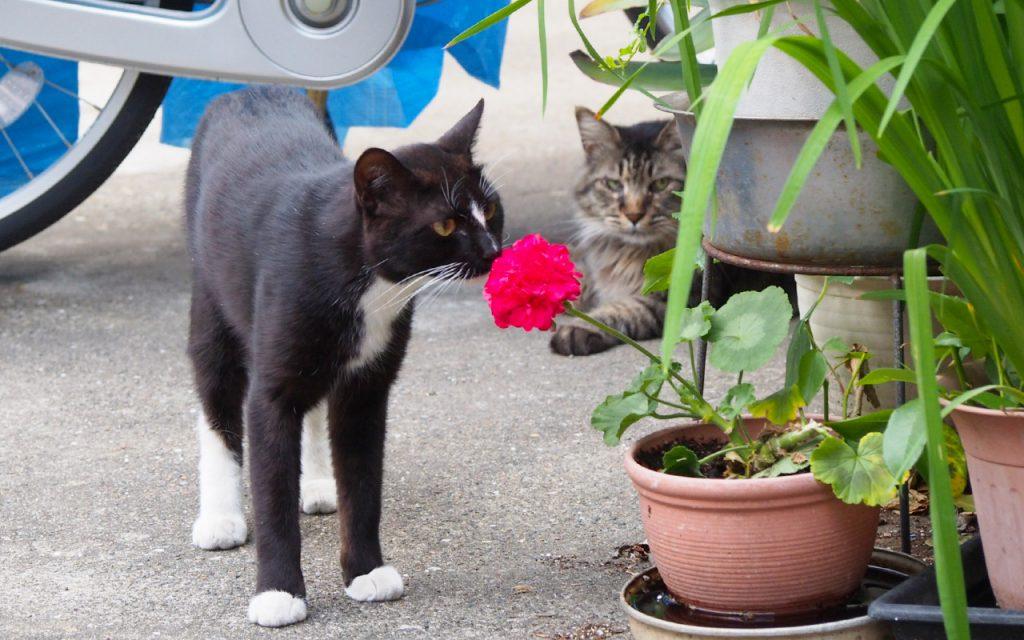 ほの君 花の香りを楽しむ