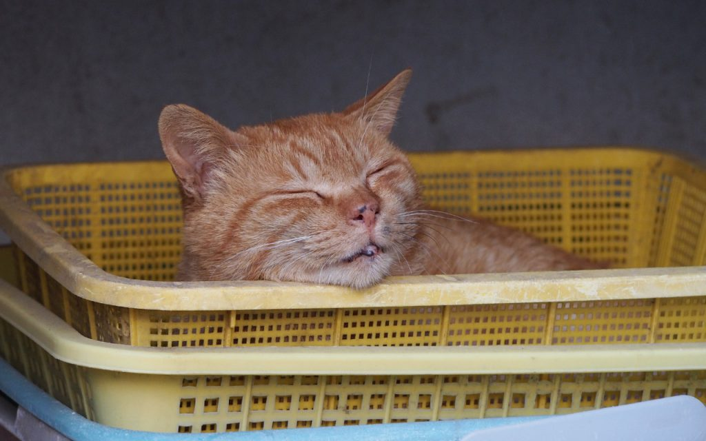 sleeping nacha