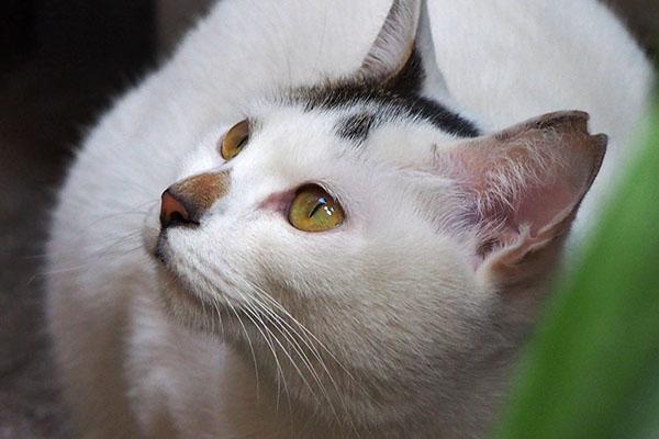輝く目をしたオーロラfav
