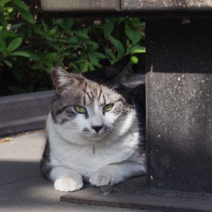 tantal under the bench