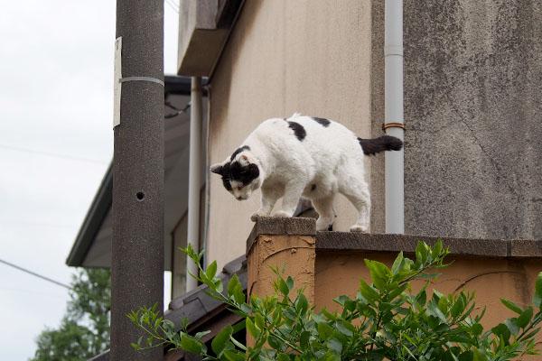 門柱から下を覗く 坊