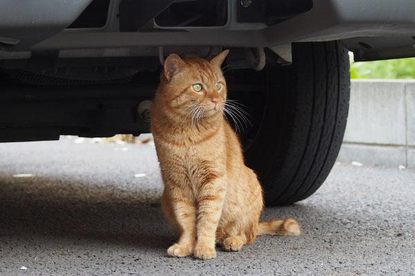 車の下でシャキーン トト
