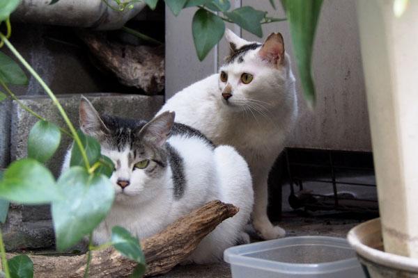 ケイとオーロラ ケイ変顔