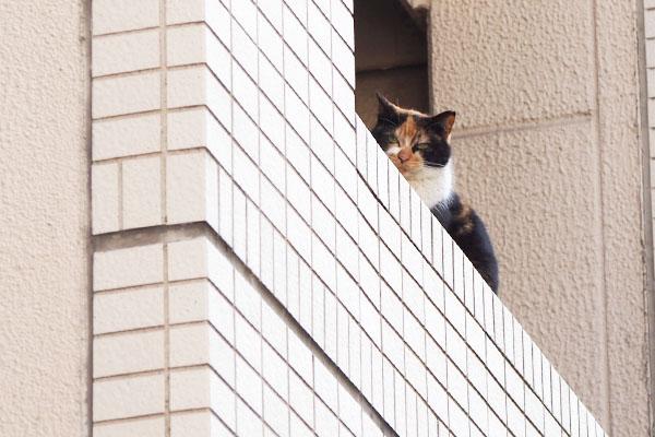リコが下を見ている
