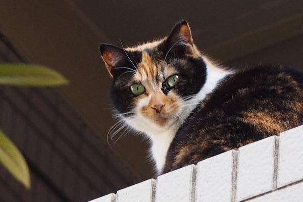 Riko watching me from 2nd floor