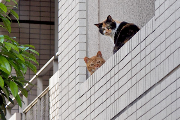 riko and cub on 2nd floor