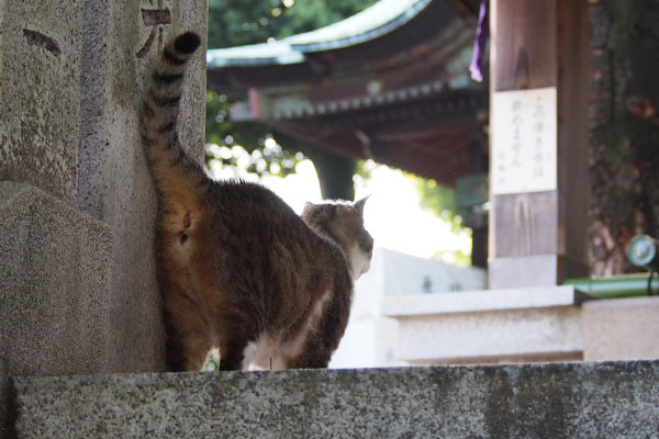 shizuku on top of step