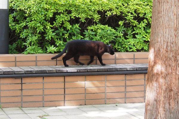 ベンチの上を歩く黒猫ボーイ