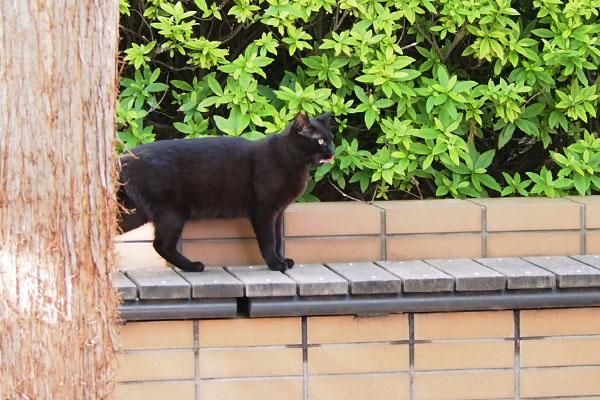 黒猫ボーイ オヤツ貰った後か