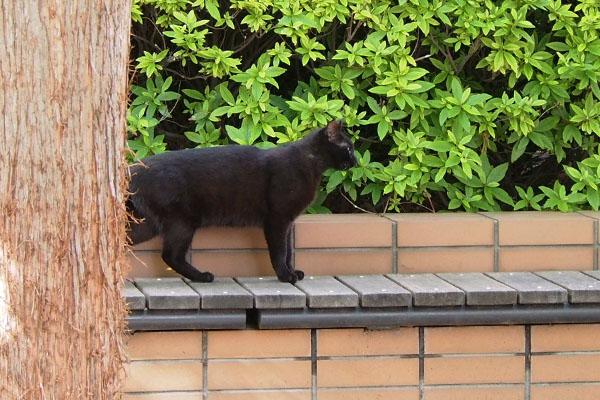 黒猫ボーイ 見送り中