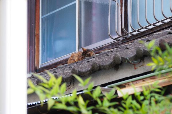 屋根の上にルルの寝姿