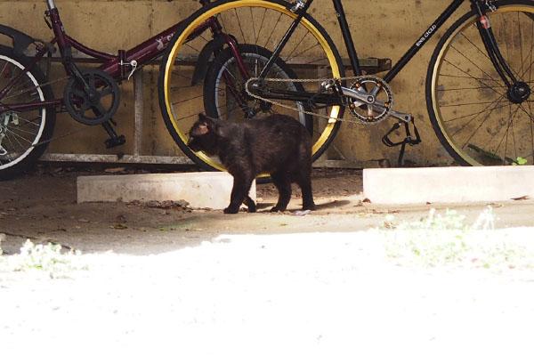 遠くに黒猫さんロック