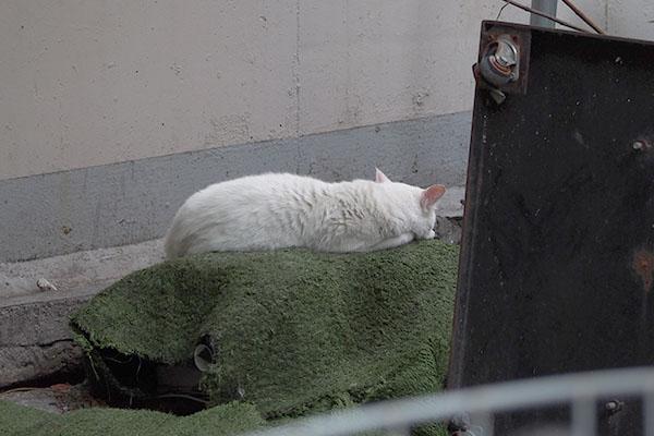Aqua sleeping