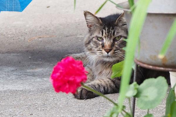 らんぽと花