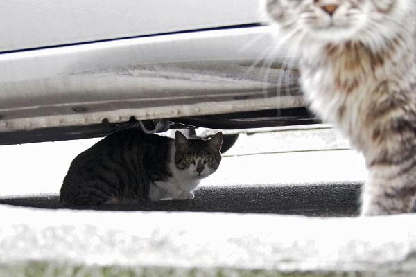 車の下にさくら 右かららんぽ