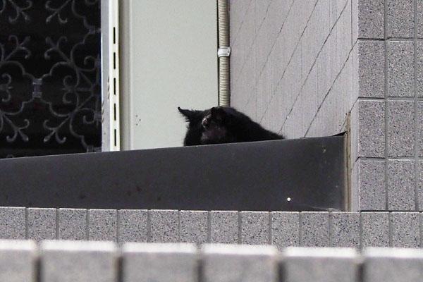 横になった黒猫
