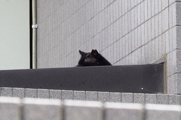 左耳にカットがある黒猫