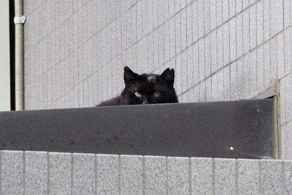 結構コワモテの黒猫頭にハゲ