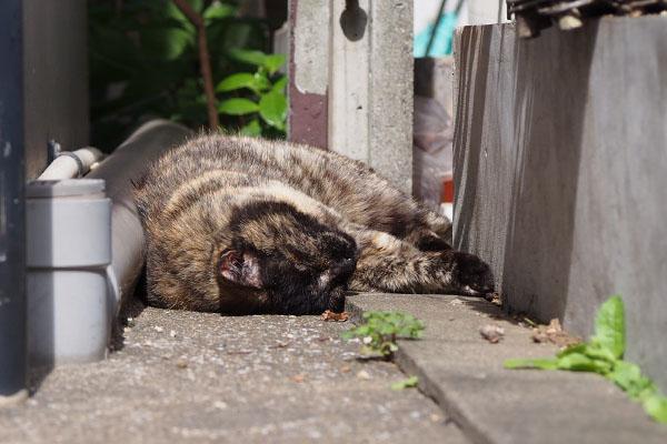 サビチッチ 爆睡太陽浴びて