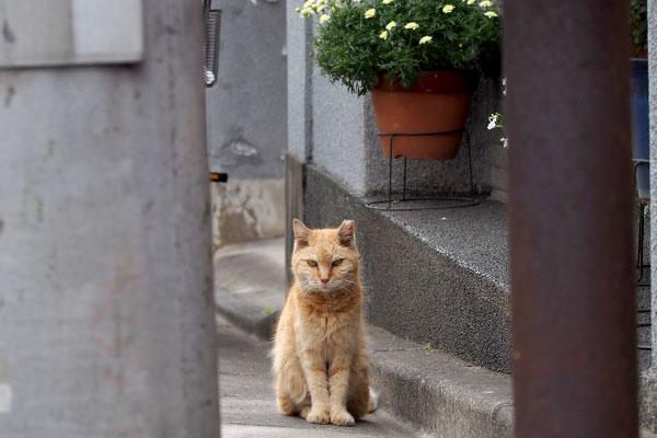 ジル お隣りの前で立ち止まる
