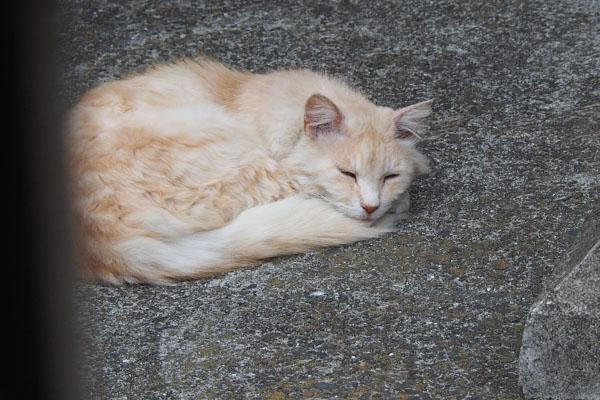 ナリコ しっぽ枕