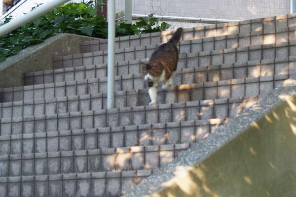 階段を下りるマリィ ブレ